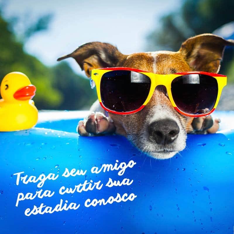 Cachorro curtindo um dia de sol com óculos de sol, deitado em uma bóia de piscina com um pato de borracha ao lado, relaxado e tranquilo